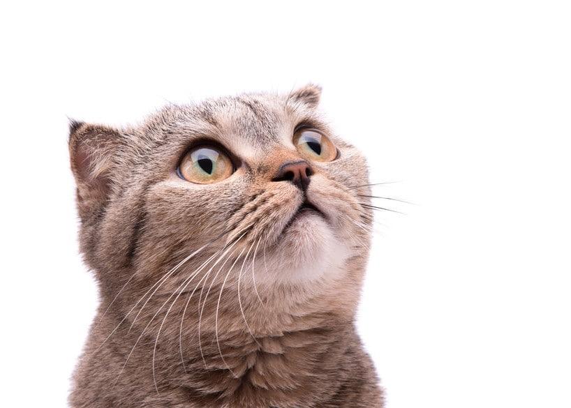 בתמונה חתול מופתע שמסתכל למעלה - תמונה מייצגת עבור הרצאות לעובדים מפתיעות ומרתקות