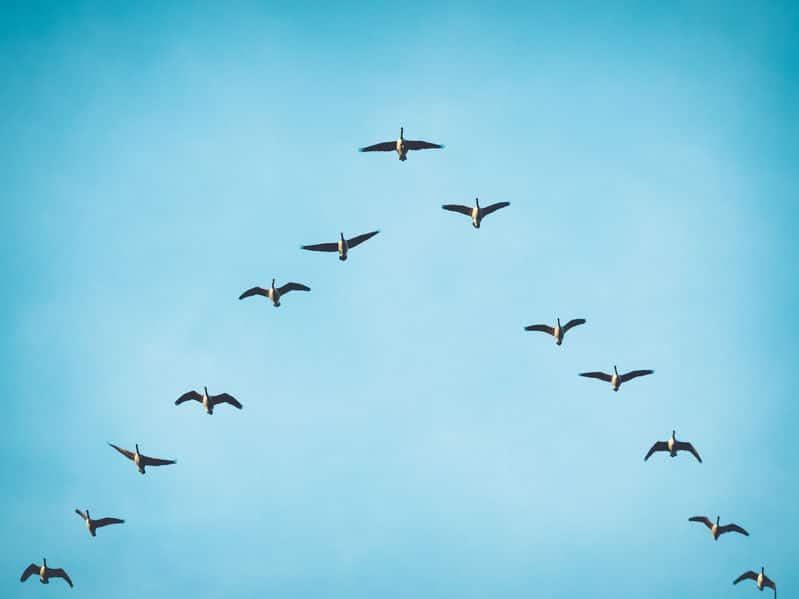 קורס פיתוח מנהיגות מבית לירון פורת - לומדים להוביל קדימה